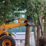 Taksim Gezi Parkı'na 21 Yeni Ağaç