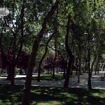 Gezi Parkı'nda Durdurmalar Durmuyor