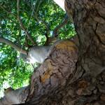 Ağaçlardan Tarih Yeşerecek