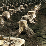Ağaç Katliamı Tam Gaz Devam