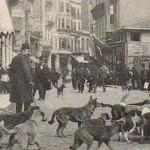 Osmanlı'da hayvan sevgisi