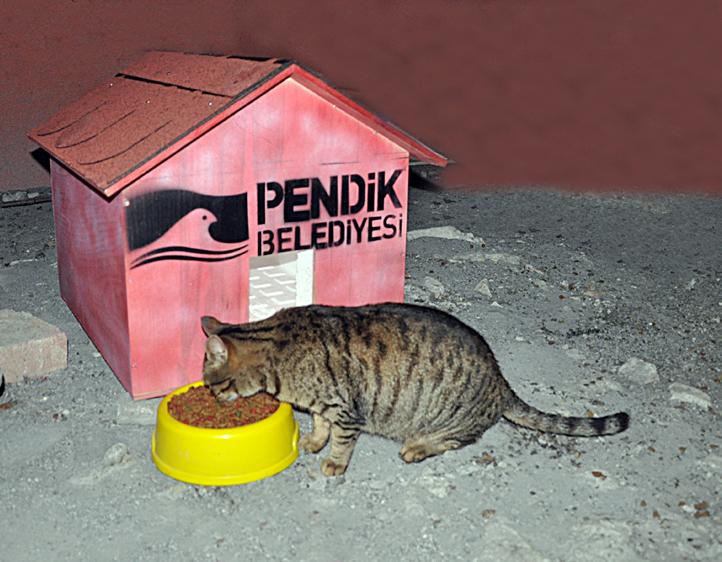pendik kedi yuvasi