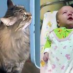 Kahraman kedi bebeği donmaktan kurtardı