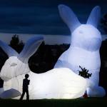 Dünyaca ünlü sanatçı 'tavşan'larıyla İstanbul'da
